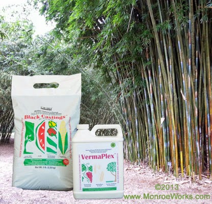 Grow Bamboo with organic worm castings fertilizer