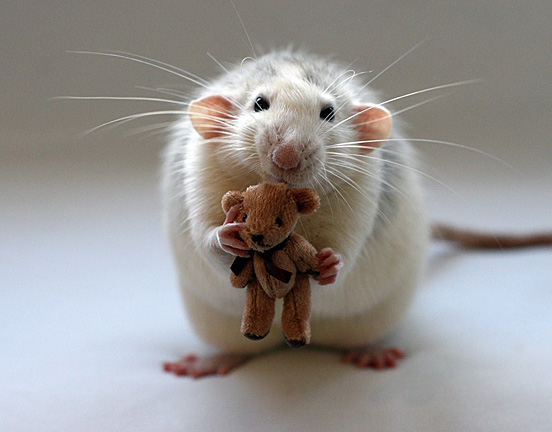 Really Cute Animals :) | Amazing Wallpapers
