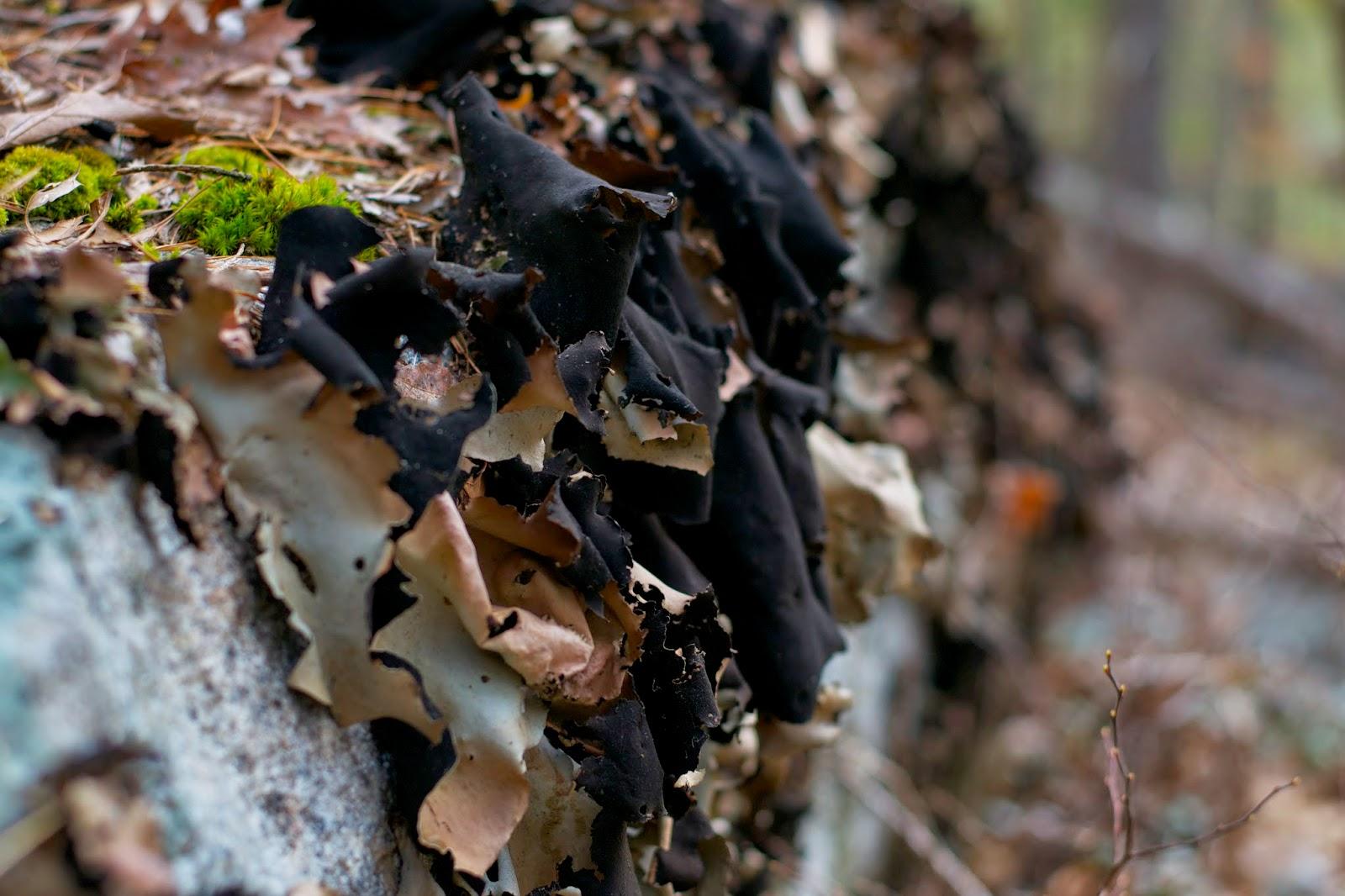 Lichens on a boulder.