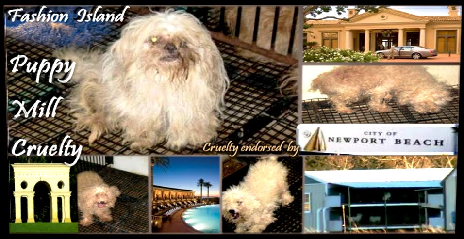 Newportbeachpuppymill.com - Inhumane Newport Beach Pet Store Cruelty