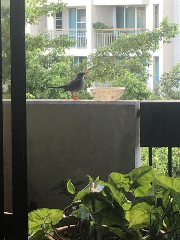Mi visitante (¡no ha vuelto desde el huracán!!