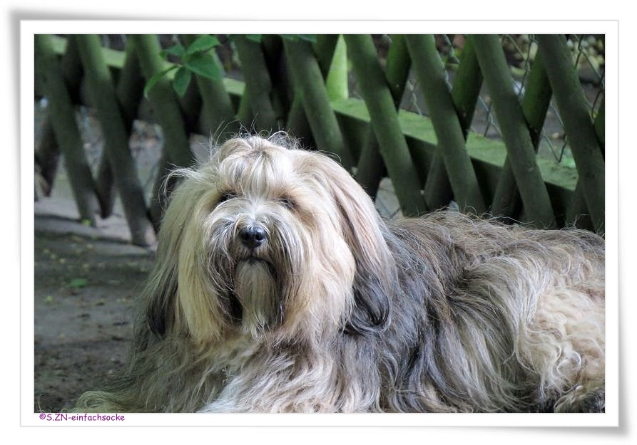 hundeblog einfach socke unh246fliche samtpfote
