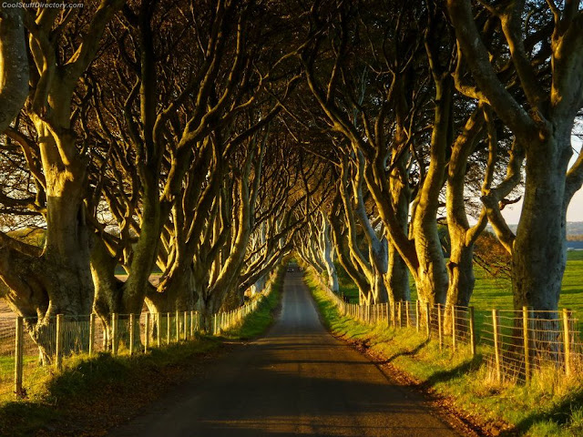 20. Dark Hedges in Northen Ireland by Tim Kosykh