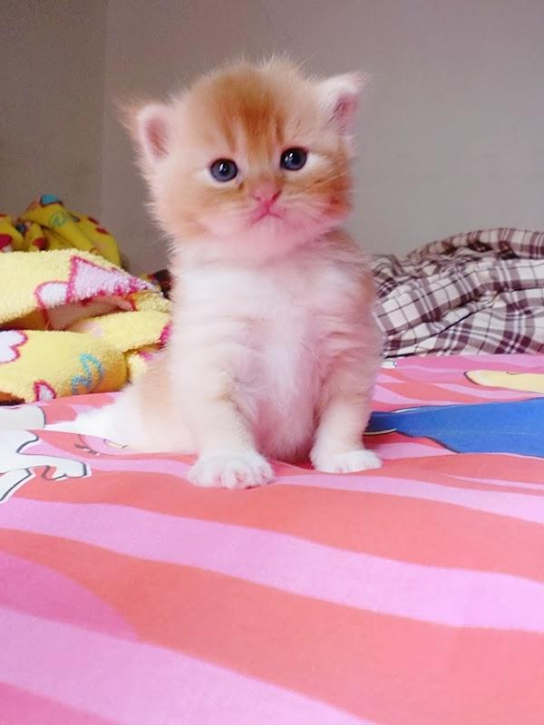 round eyes kitten