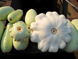 vkusniogorod - заморозка огурцов и кабачков – кабачки и патиссоны