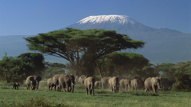 elephants, tree, mountain, wallpapers, nature, desktop, HD, HQ, tapandaola111