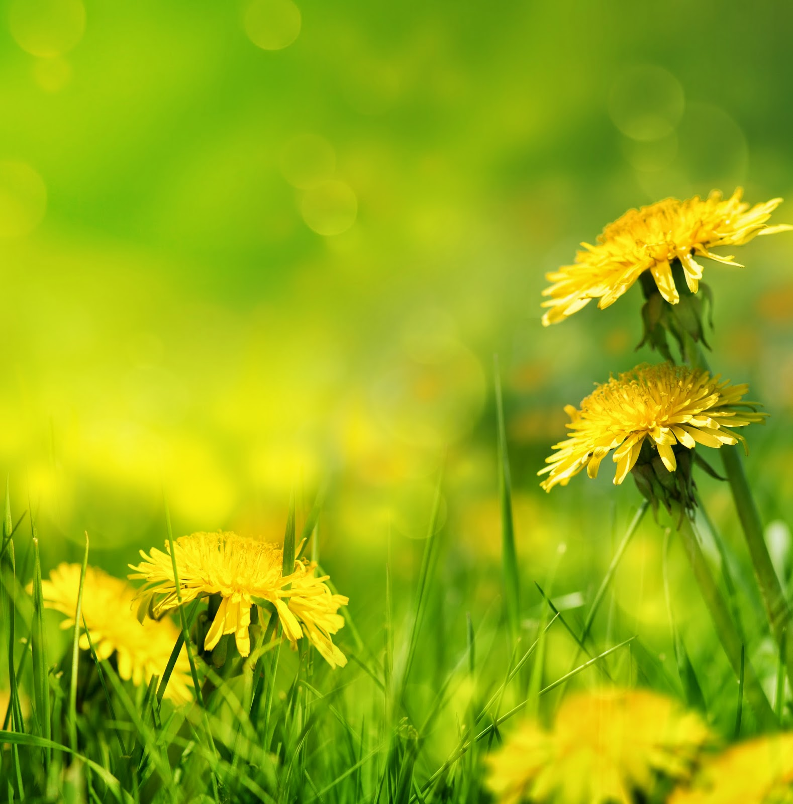 Imagenes fotograficas imagenes bonitas de flores para for Fotos para poner de fondo de pantalla
