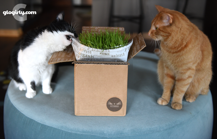 Katie and Waffles open box of Whisker Greens Pet Grass