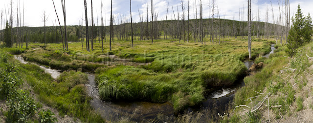 8 photo panorama - Valley near Beaver Lake, Yellowstone National Park