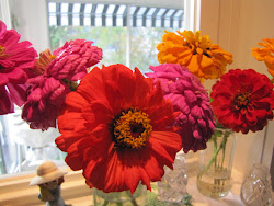 Last Zinnia's of the Summer!