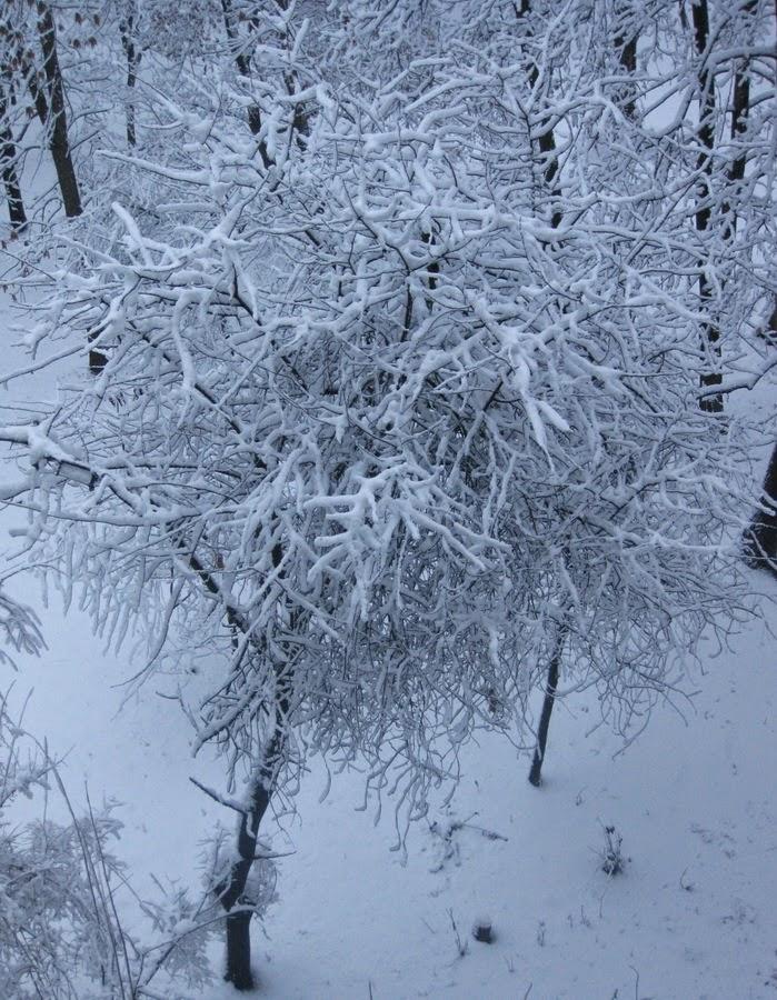 снег на ветвях деревьев