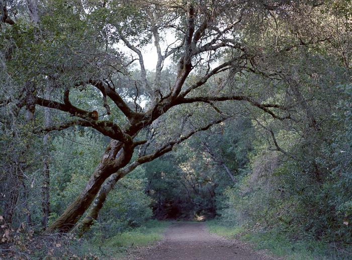 Uvas Canyon County Park Mamiya 645AF Portra 800
