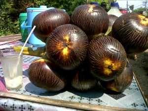 manfaat buah lontar, khasiat buah lontar, lontar segar