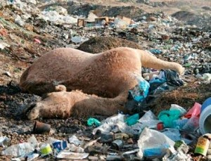 Plastic bags effects on human health - The Arroyo Sage Ethical Vegans Should Refuse Plastic