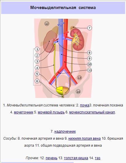 Болезниность во время секса при болезни почек