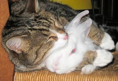 http://1.bp.blogspot.com/-ce9nkXlq7kU/TmzdZz7kq1I/AAAAAAAAAyc/HLexHr1V2L8/s1600/kucing-tidur-peluk-arnab-640x480.jpg