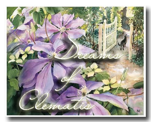 Dreams of Clematis