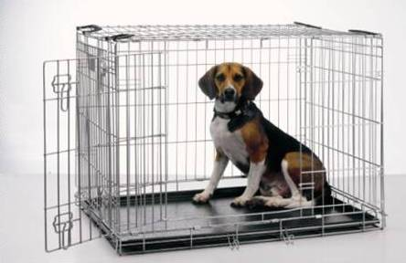 Crate Training Puppies on Dogs In The City  Crate Training    God   S Gift To Dog Owners