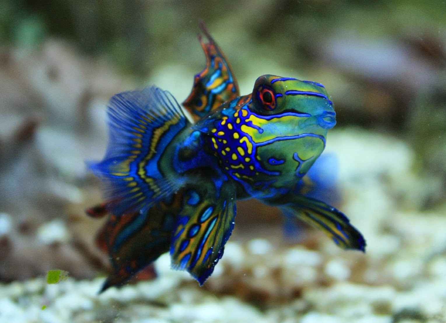 Blok888 top 10 most beautiful animals in the world for Best fish in the world