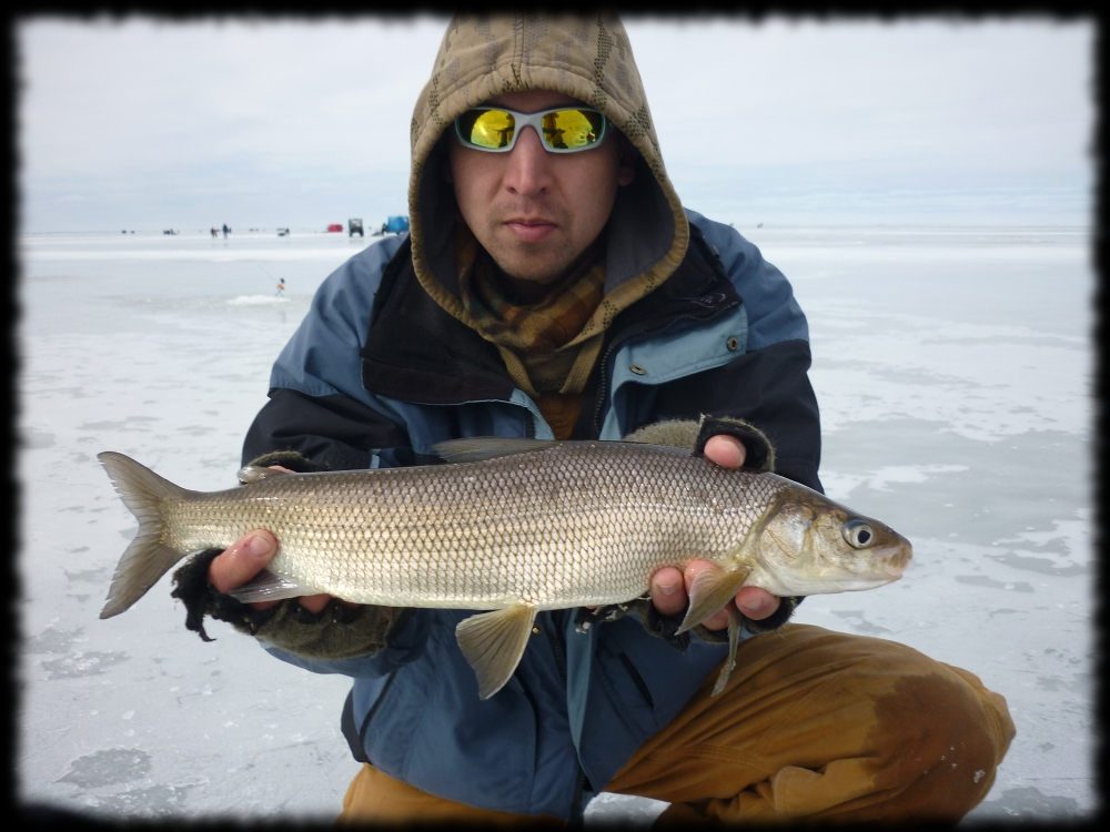 illinois wisconsin fishing refined whitefish tactics