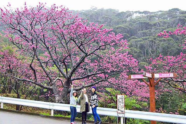 3 girls, cherry blossoms, roadside, signs, Mt. Yae