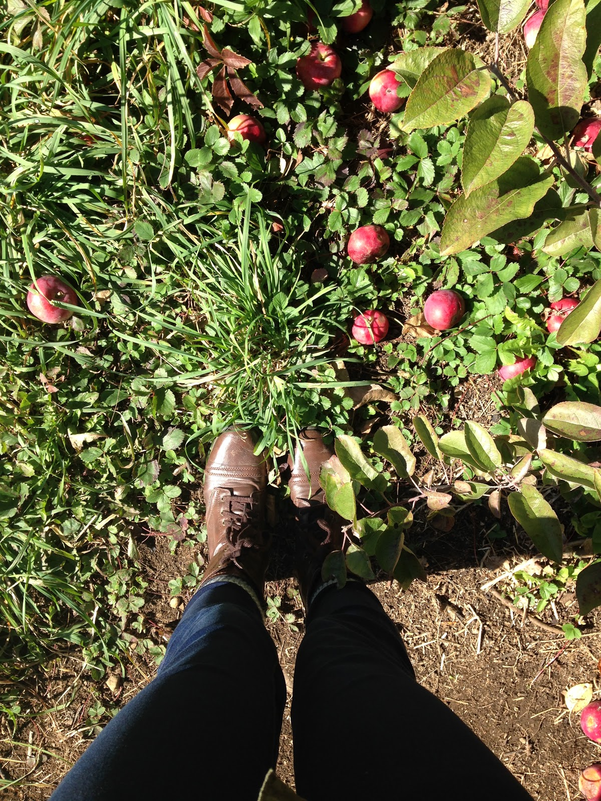 Apple Picking at Mountain Orchards | Akinokiki