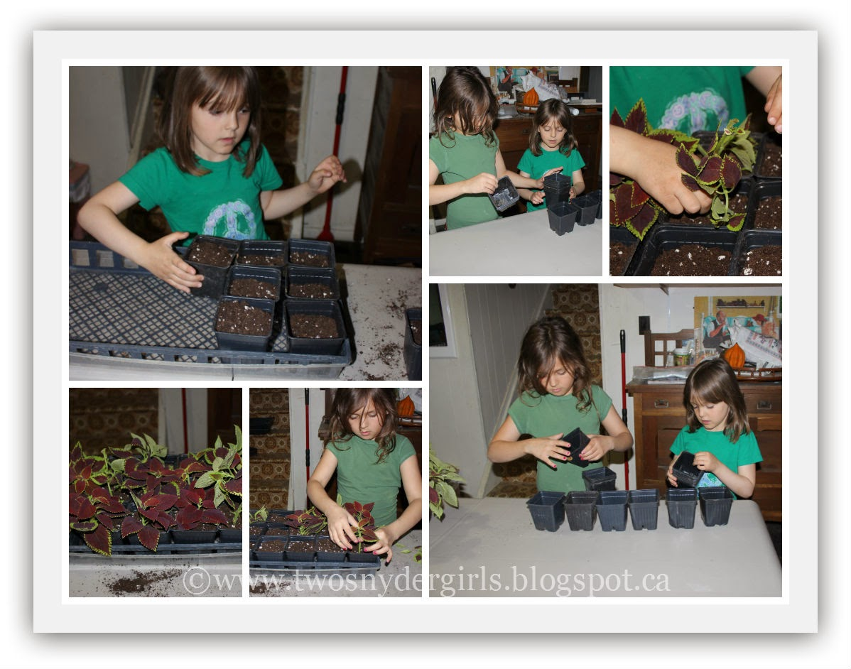 Girls planting the cuttings