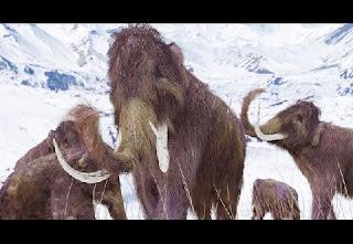 Cientistas tem considerado a hipótese de clonar uma espécie de mamute extinta há 27 mil anos, a partir dos genes de um espécime congelado e em ótimas condições.