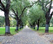 Carlton Gardens Australia