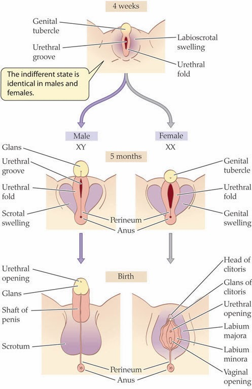 yavuz tellioğlu: female genital mutilation (fgm), also known as, Human Body