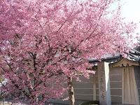 長徳寺は浄土宗報恩山
