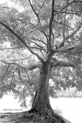 tree photograph, The Chattahoochee River