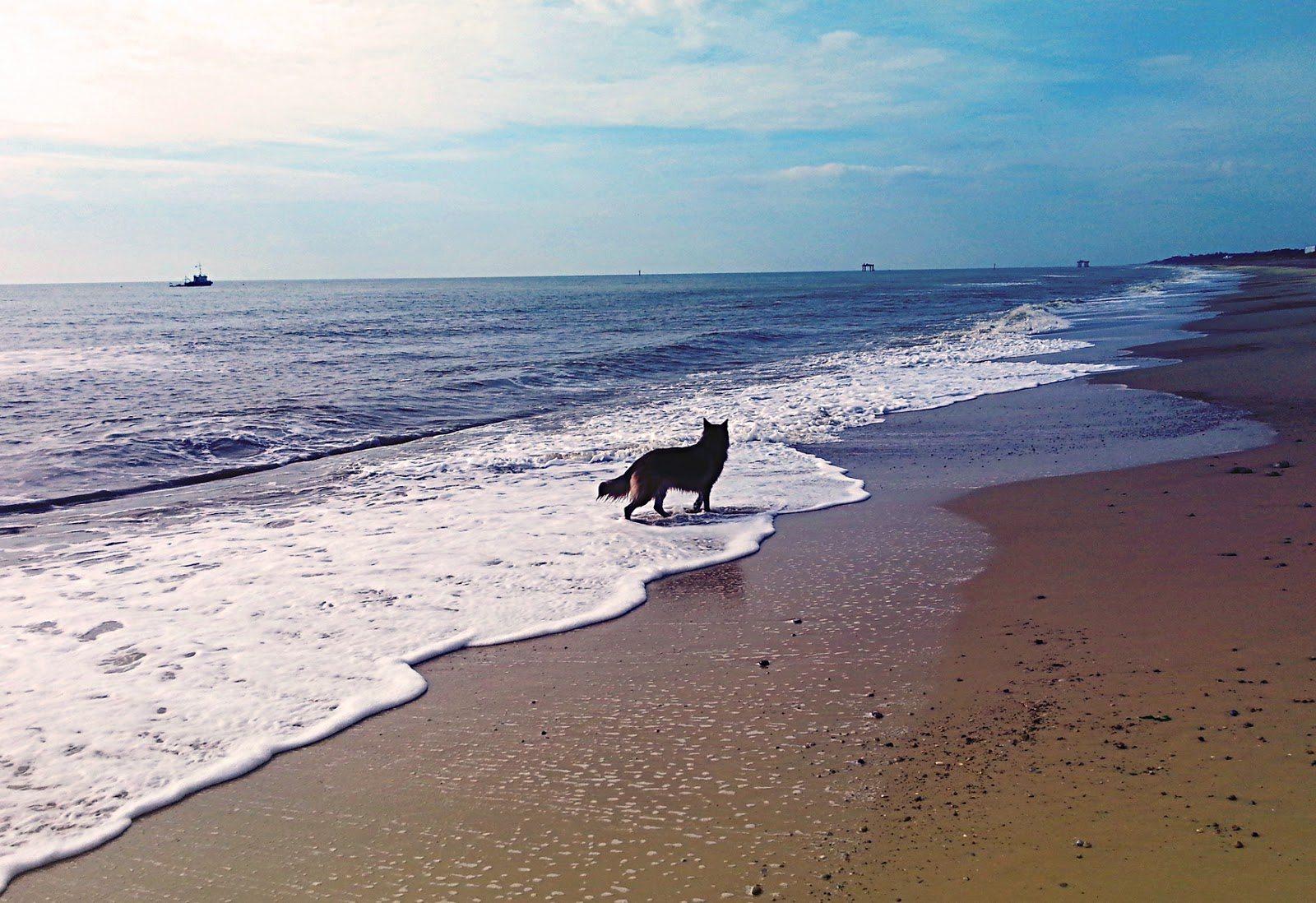 Sizewell Beach Dogs