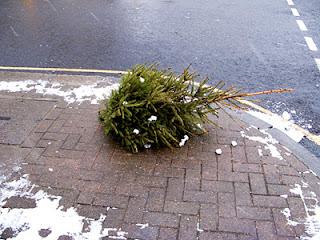 sad dead christmas tree on road