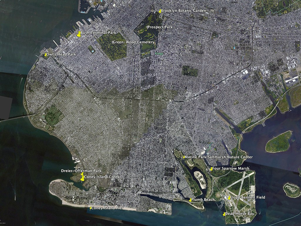 the city birder birding maps - (download a greenwood cemetery birding map here)