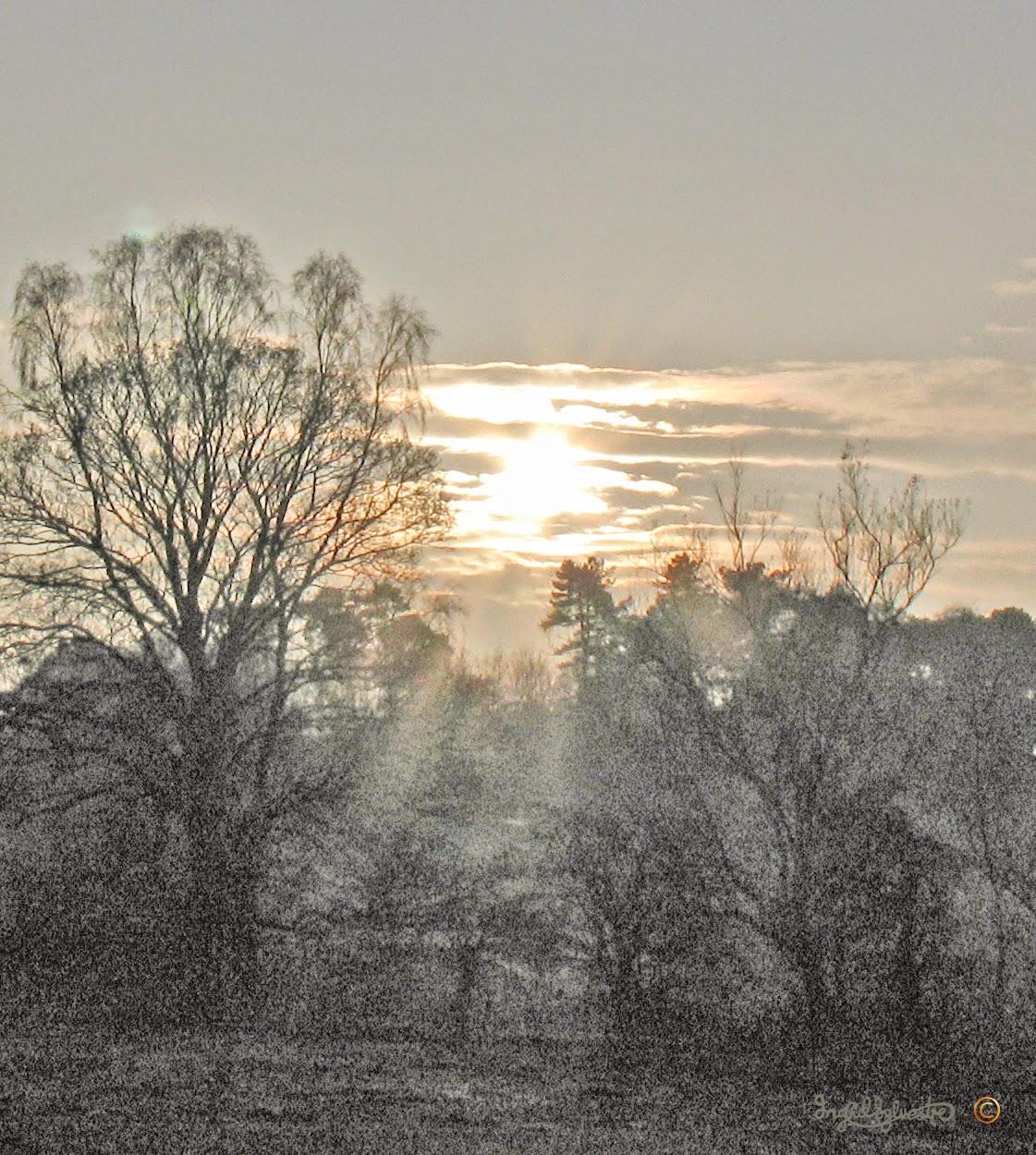 Misty November Sun behind the Giraffe Tree - Ingrid Sylvestre Artist North East UK