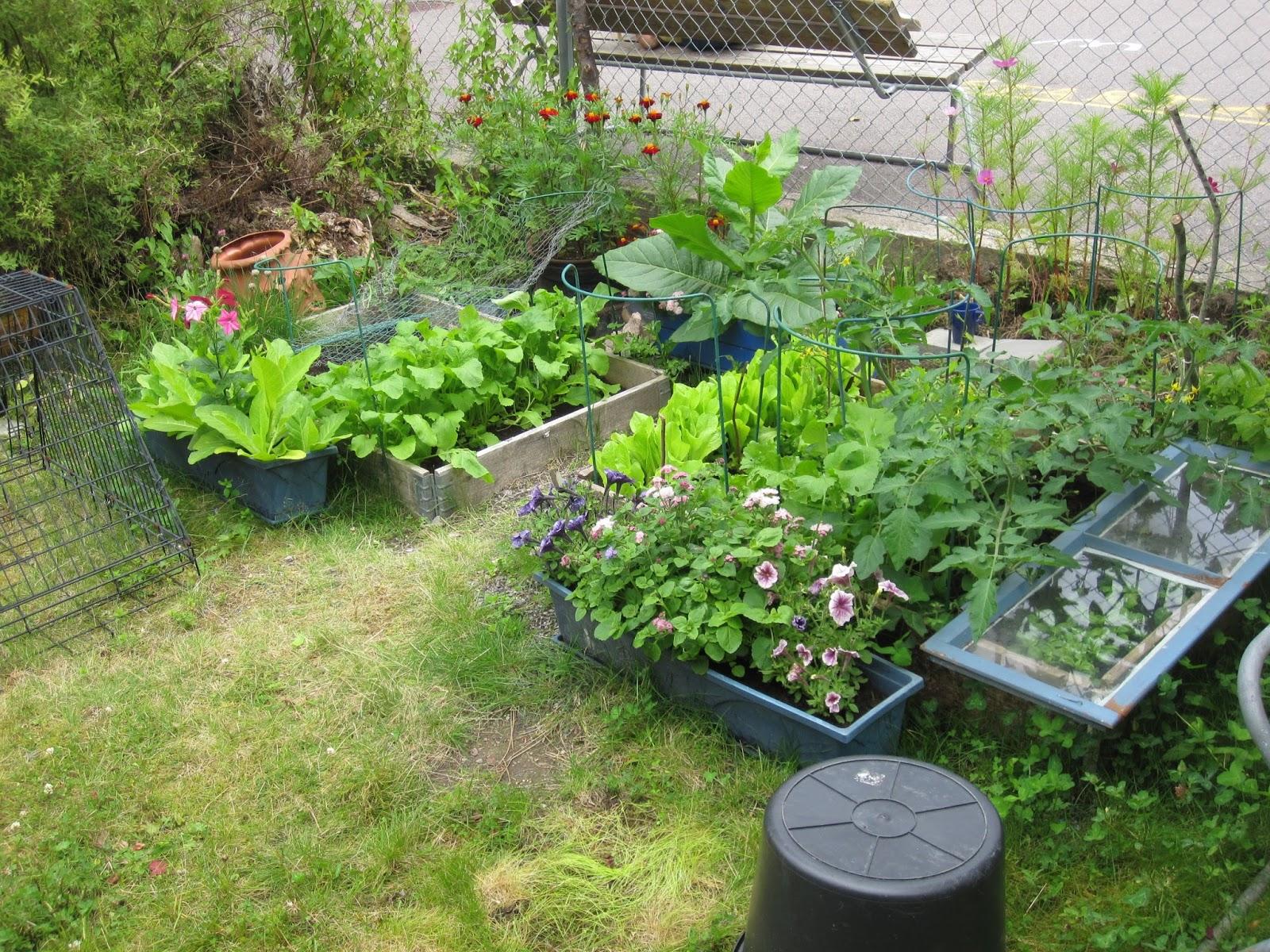hageliv i r 230 lingen fargerikt i hagen