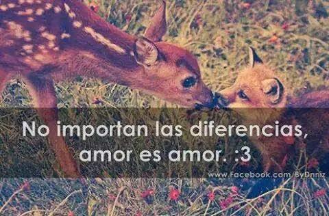 amor diferentes