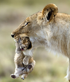 Madre no hay mas que una.