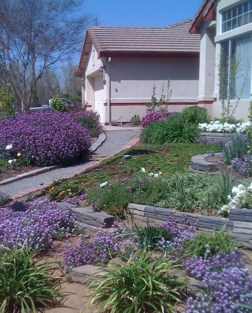 Geno's Garden Design & Coaching | : Lawn-Free Garden Tour