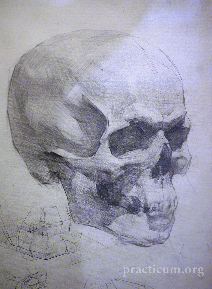 Russian Academy Drawings Skull Studies Russian Academy