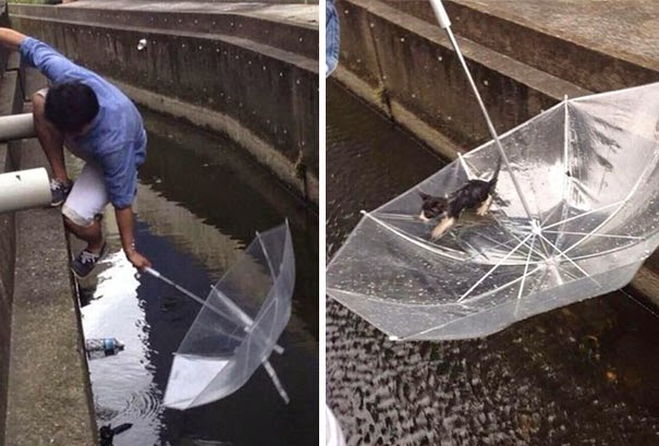 20+ Photos That Will Restore Your Faith In Humanity - Man Saves A Drowning Kitten With An Ubrella