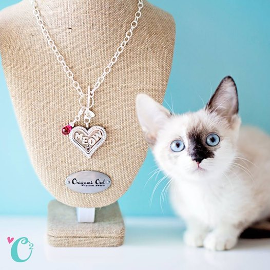 il mom drkam lockets cat products b