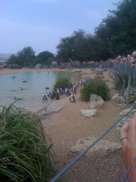 whipsnade zoo penguins