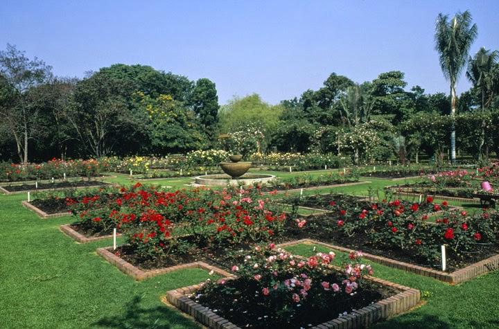 Plantas m gicas jard n bot nico jos celestino mutis de for Jardin botanico medicinal