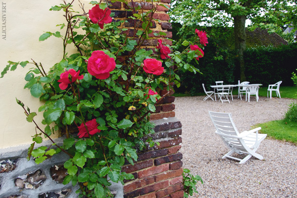 aliciasivert, alicia sivertsson, frankrike, france, normandy, normandie, hus, house, garden, trädgård, roses, rosor, la saussaye