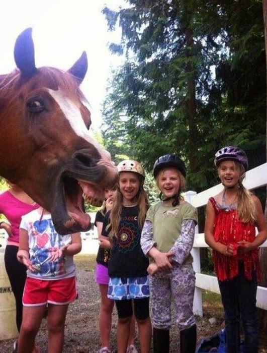 caballo arruinando la foto