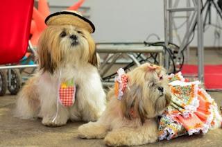 Um shopping de Brasília organizou uma festa junina para animais de estimação dentro do prédio Divulgação