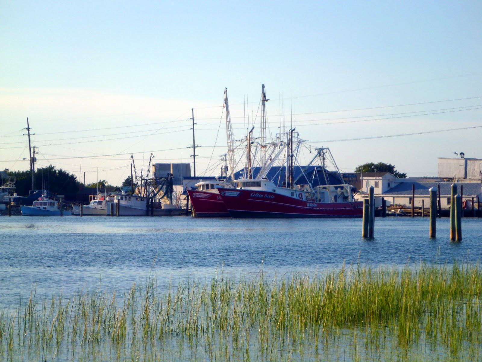 how to catch shrimp in nc