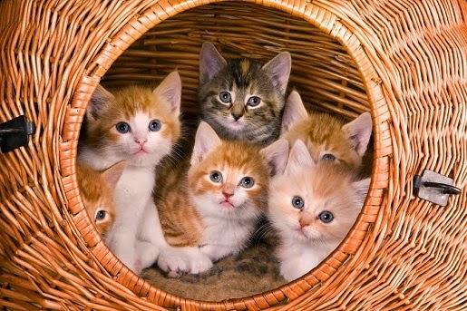 Jak wygląda proces adopcji zwierząt ze schroniska